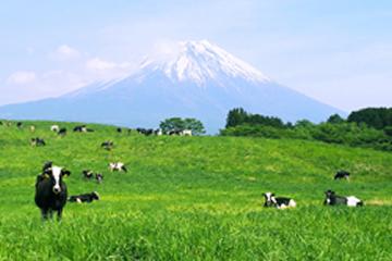 富士ミルクランド 富士山